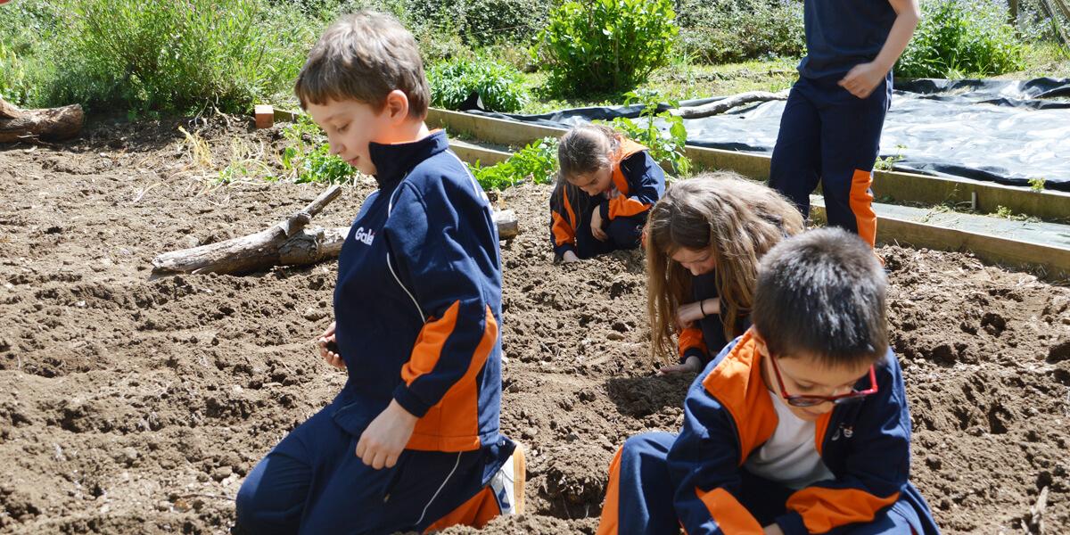 proyecto innovador colegio galen