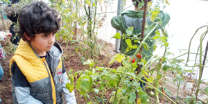 Centro Galén - Proyecto Verde
